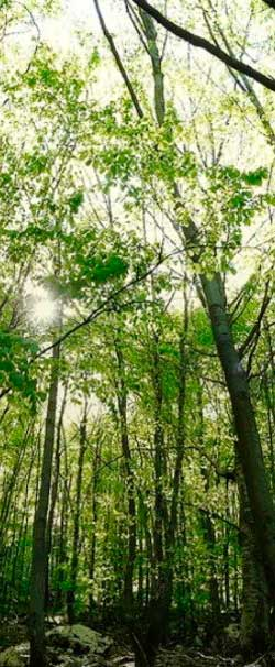 633930__green-forest_p