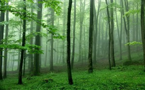 645217__mist-among-trees_p